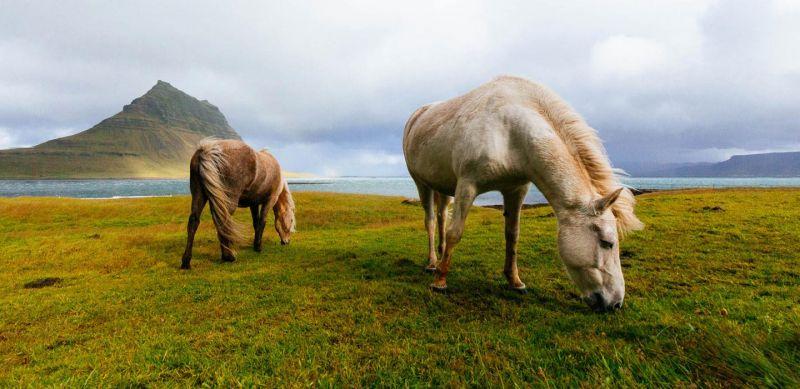 ИСЛАНДИЯ - Земя на природни чудеса снимка 8