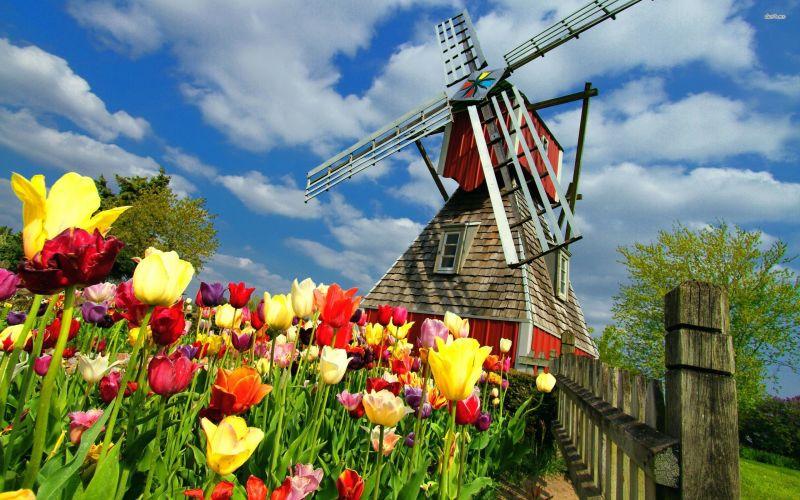 Амстердам - в страната на лалетата снимка 6