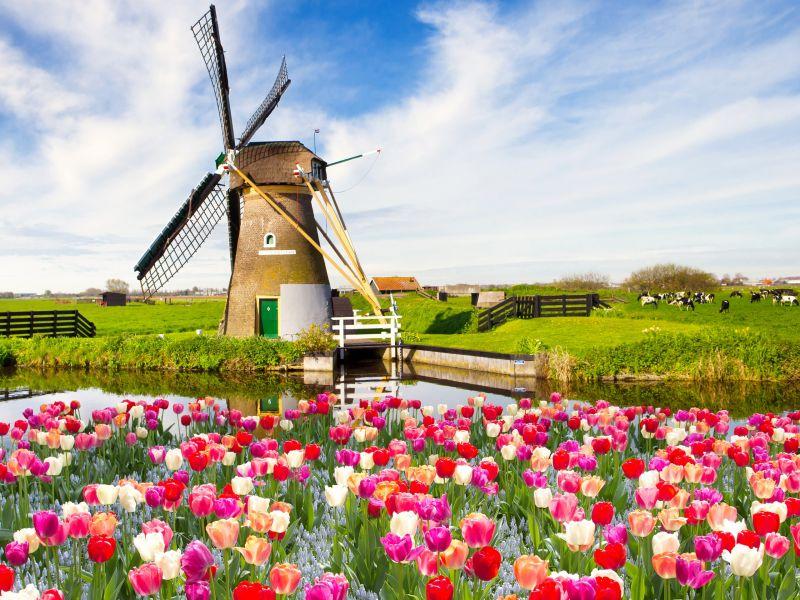 Амстердам - в страната на лалетата снимка 2